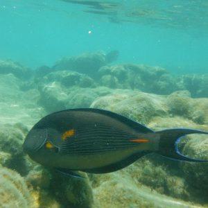 Fish in Sharm El Sheikh