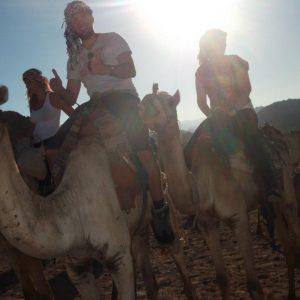 Camel riding in Sharm El Sheikh