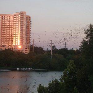 bats of austin