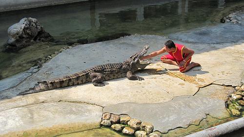 croc thailand