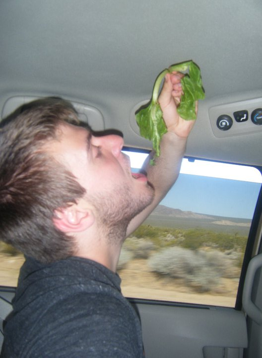 eating lettuce in the car