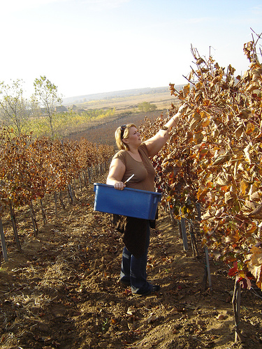 Wine Hungary
