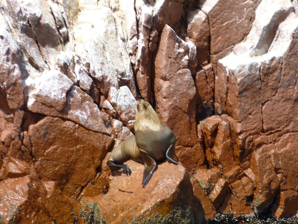 some more seals