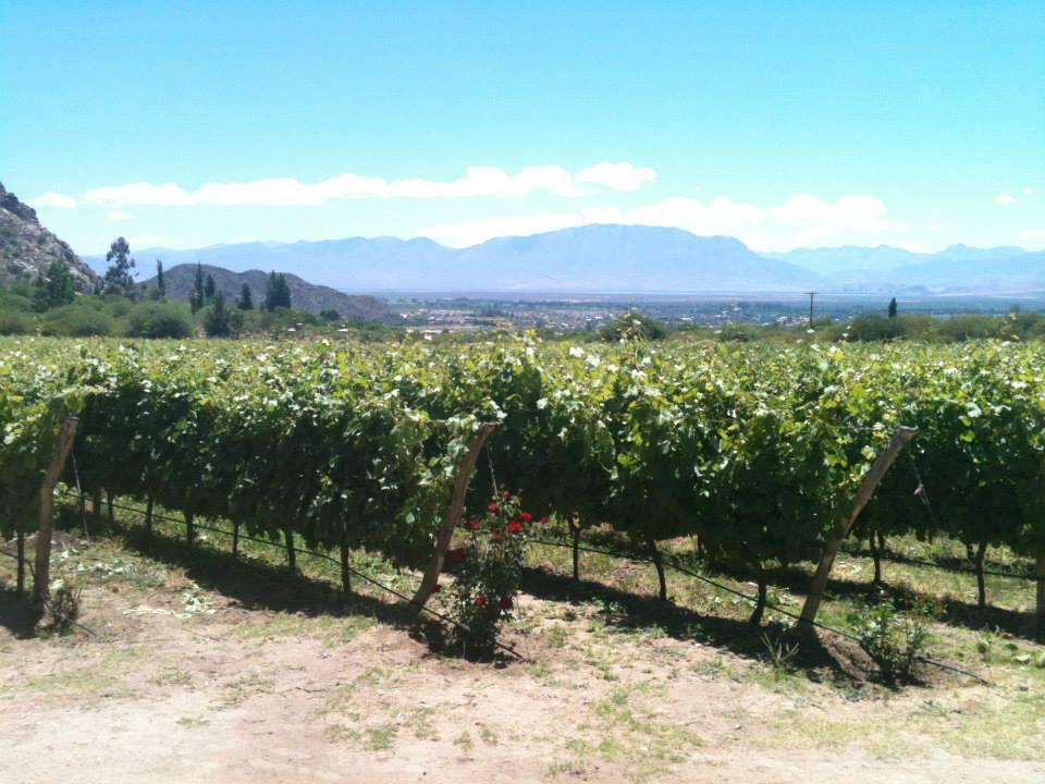 Chianti Wine Route