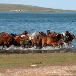 10 Things To Do In Mongolia
