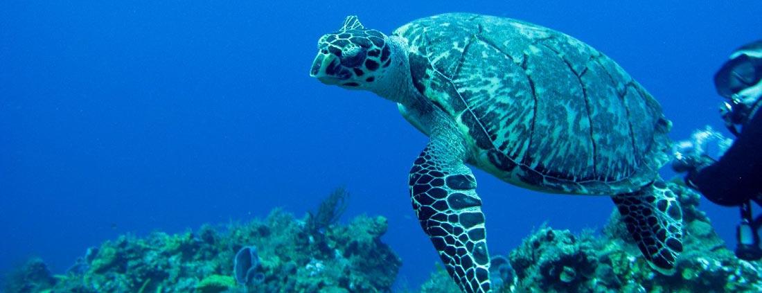 gran-canaria-scuba-diving