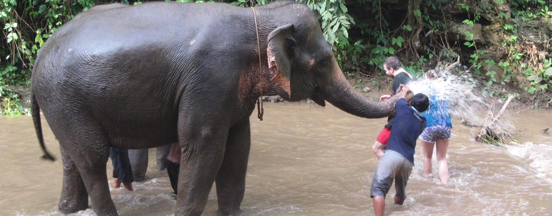 elephant wet