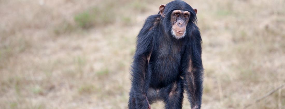 monkey-africa