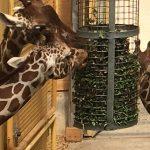 Rotterdam Zoo & Aquarium Review