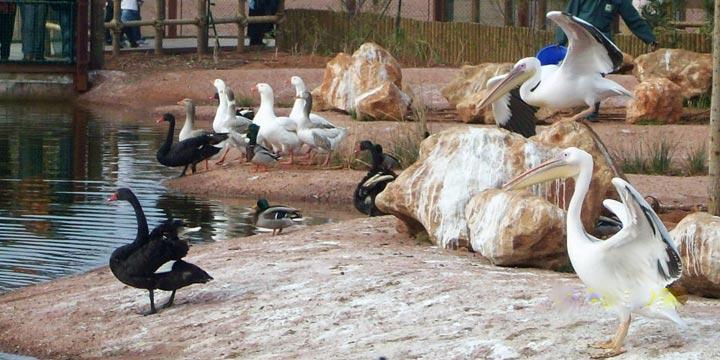 Zoo-De-Rabat