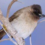 Birds In Malindi